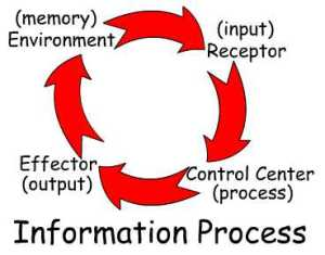 Information Processing Loop